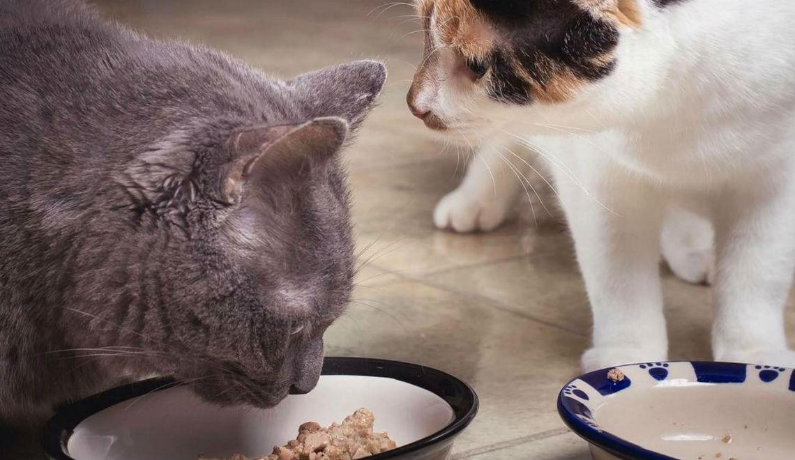 Cat Treats Singapore